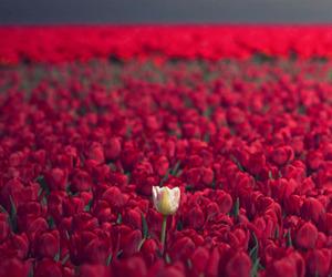 champs, Fleurs, and Kenya image