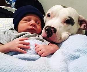 dog, baby, and kids image
