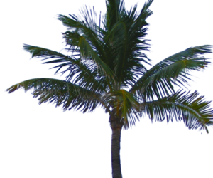 png and transparent image