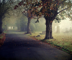 tree, autumn, and cemetery image