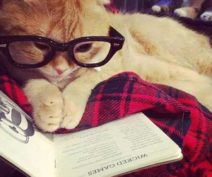 cat and reading image