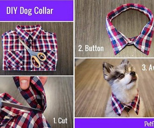 dog, diy, and collar image