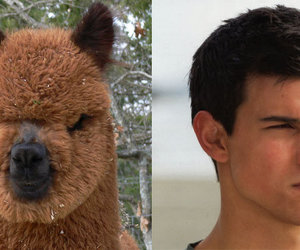 Taylor Lautner, lol, and funny image