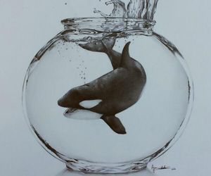 animal rights, whale, and orca image