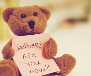 bear, teddy bear, and teddy image