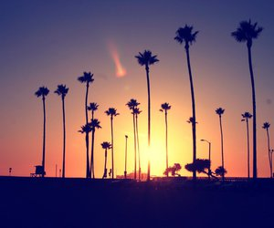 beautiful, palm trees, and sun image