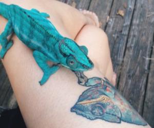 tattoo and animal image