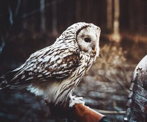 bird, forest, and owl image