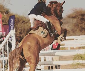 animal, beautiful, and equine image
