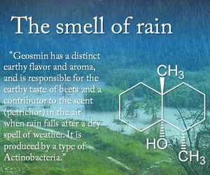 rain, smell, and science image