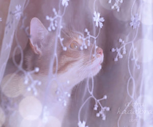cute cat, etsy, and lovely image