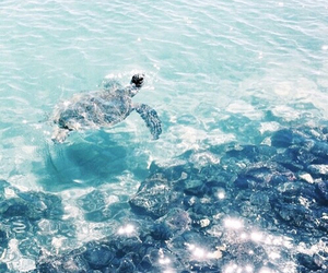 turtle, summer, and ocean image