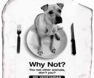 animals, vegetarian, and dogs image