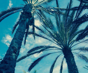 summer, palm, and paradise image
