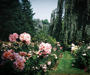 flowers, trees, and green image