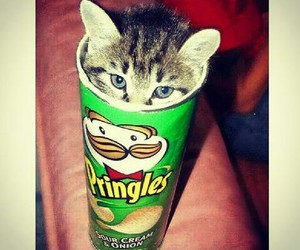 cat, pringles, and animal image