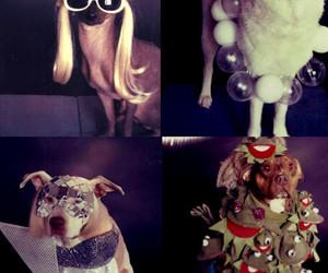 cachorro, creativity, and criatividade image