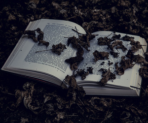 autumn, book, and dark image