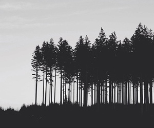 black and white, nature, and trees image