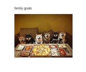dogs, family, and funny image
