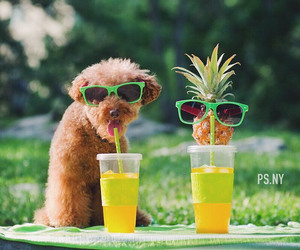 animals, drink, and fruit image