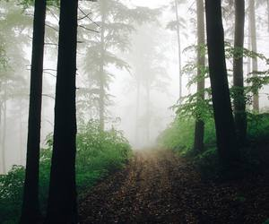 alternative, fog, and forest image