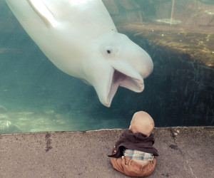 baby, animal, and dolphin image