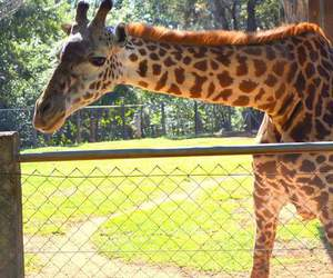 day, melman, and photo image