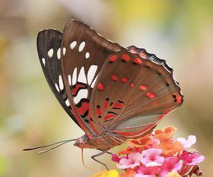 flower, beautiful, and butterfly image