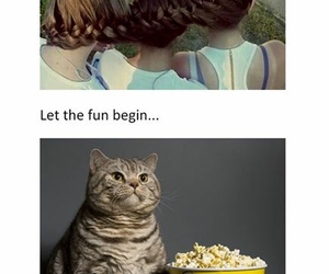 cat, fun, and funny image