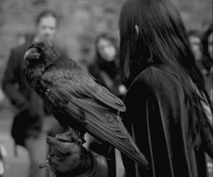 crow, raven, and black and white image