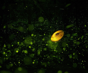 green, love, and life image
