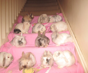 pale, pink, and rabbit image