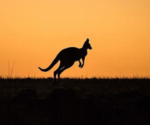 australia and life image