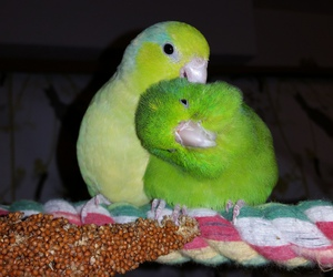 animals, birds, and cuddle image
