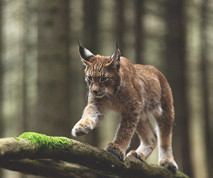 nature, animal, and cat image