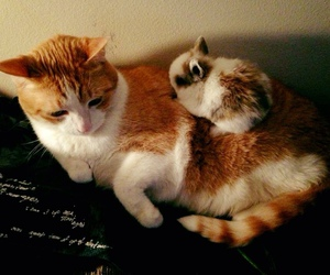 bunny, cat, and cute animals image