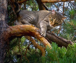 animals, cats, and nature image