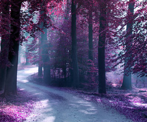 tree, purple, and beautiful image