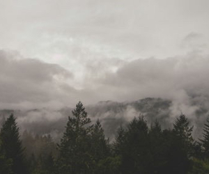 forest and clouds image