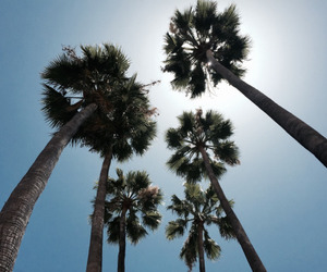 palms, summer, and Sunny image