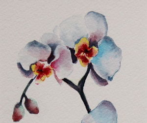 art, orchids, and watercolour image
