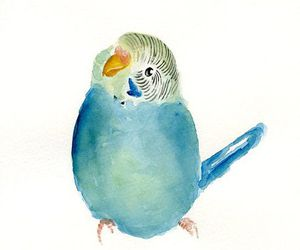 art, budgie, and watercolour image