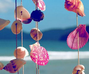 beach, ocean, and shells image