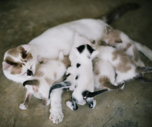 animals, cat, and kittens image