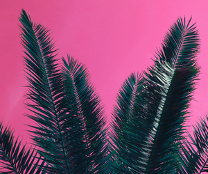 pink, palms, and wallpaper image