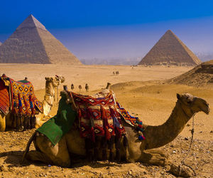 arabic, camels, and escape image