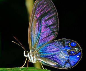 butterfly, insect, and nature image