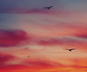 bird, sky, and sunset image