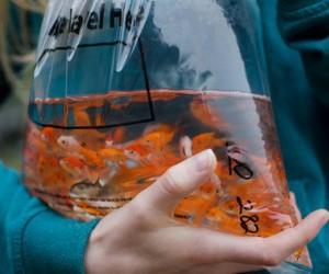 fish, orange, and water image